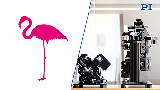 Flamingo Lightsheet Fluorescence Microscopy