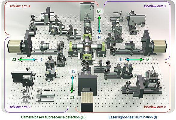 The IsoView microscope has four orthogonally positioned arms for a simultaneous light sheet illumination and fluorescence detection.